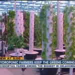 Hydroponic_Farmers_Keep_Greens_Coming_scissortail-farms